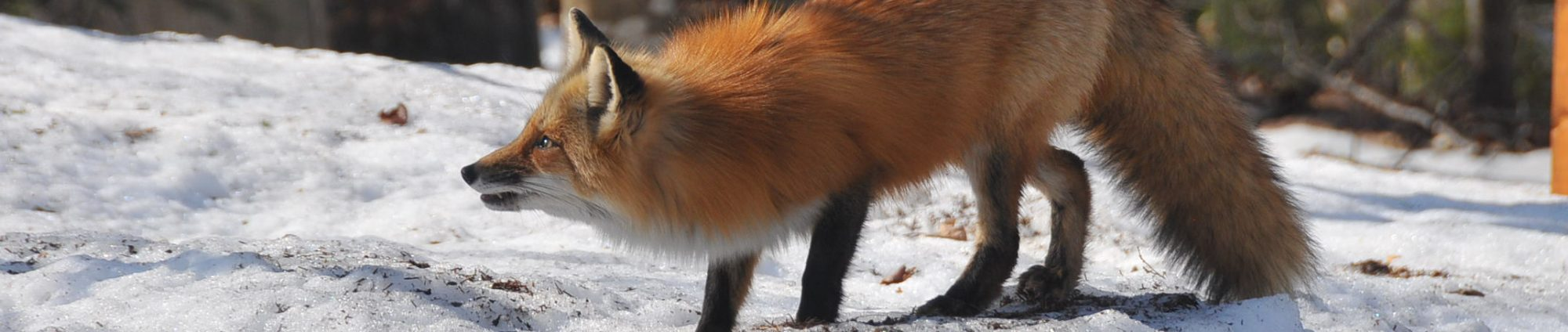 Programmes Coyote